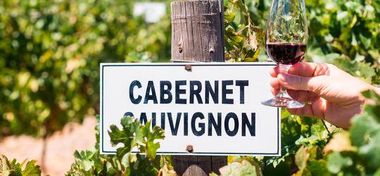 Hoy se festeja el día internacional del Cabernet Sauvignon