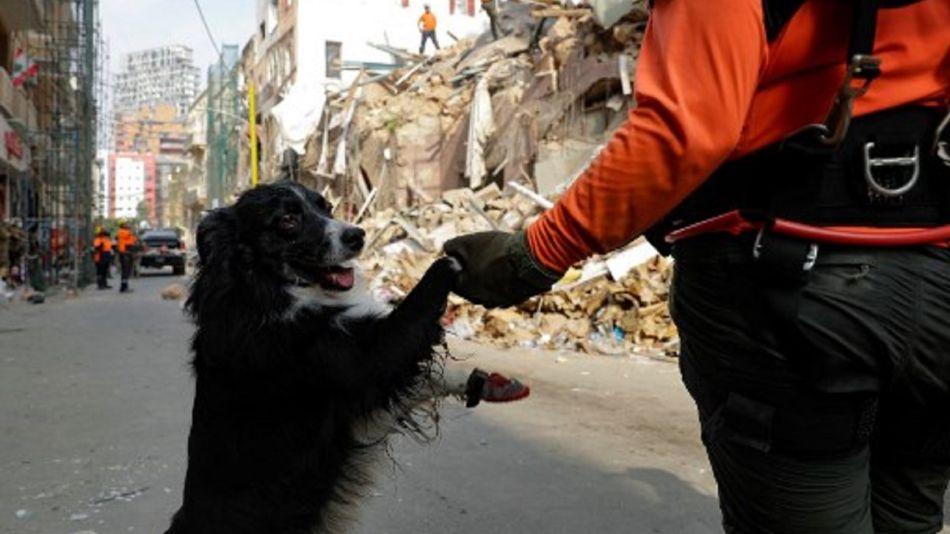 Flash, el perro rescatista chileno en Beirut