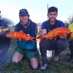 Un grupo de pescadores rescató carpas que estaban agonizando en una cantera de Olavarría.
