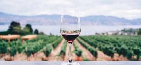 """Hoy es el día de los """"crack"""" del vino"""