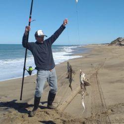 Invasión de pez elefante en Miramar