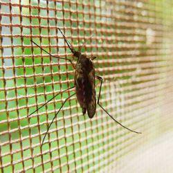 Una persona de 54 años se convirtió en el primer caso nativo de dengue en Italia.