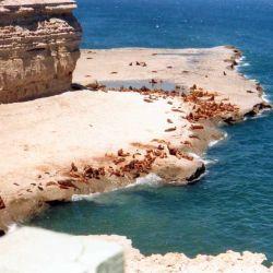 Punta Pirámide es la colonia reproductiva de lobos marinos de un pelo más grande de Península Valdés.