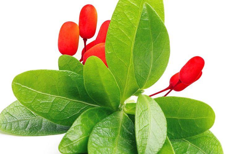 Plantas venenosas 20200914