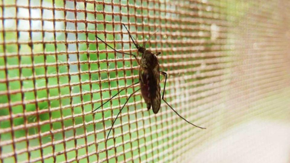 Europa ya registra casos autóctonos de dengue