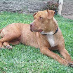 El cuidado que reciben desde cachorros por parte de sus dueños es fundamental para su comportamiento futuro.