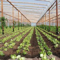 Desarrollo agrícola.