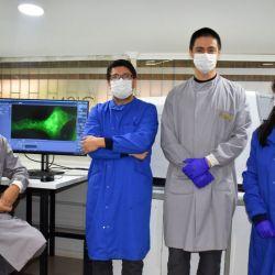 Los investigadores empezaron a trabajar a principios de febrero, cuando inocularon a la alpaca Buddha con proteínas del coronavirus.