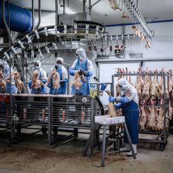 Los empleados trabajan en las instalaciones de procesamiento de Maison Lafite que producen foie gras y otros productos de pato en Castelnau-Montaut, suroeste de Francia. | Foto:Philippe Lopez / AFP