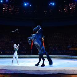 Artistas del Gran Circo Estatal de Moscú ensayan el espectáculo llamado  | Foto:Natalia Kolesnikova / AFP