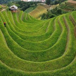 Esta fotografía aérea muestra campos de arroz en terrazas en el distrito de Mu Cang Chai, en el norte de Vietnam. | Foto:Manan Vatsyayana / AFP