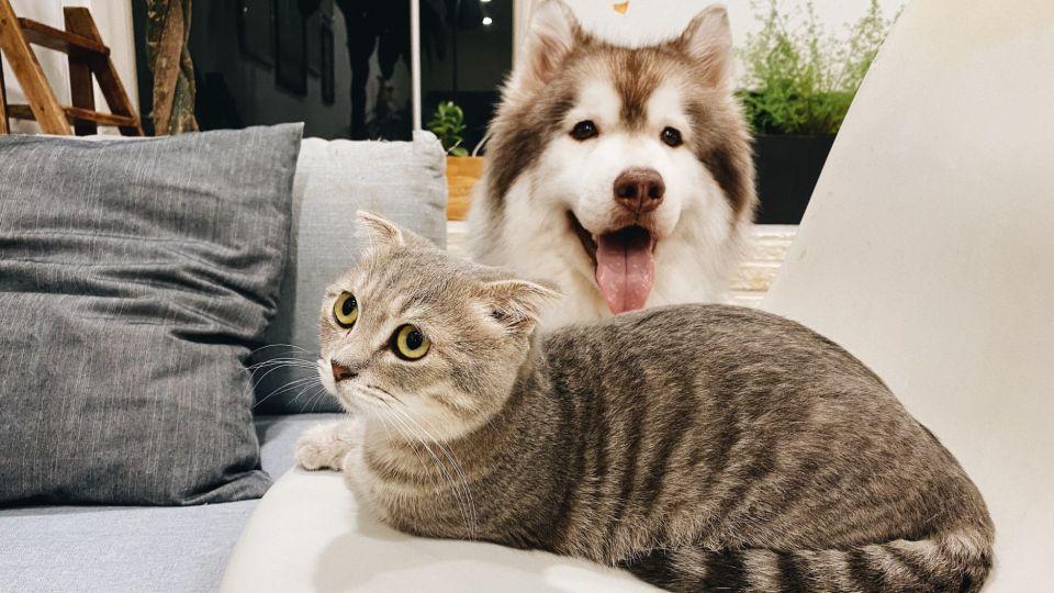 Las mascotas ideales para la familia.