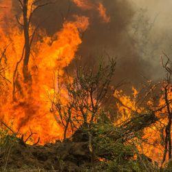 El gobierno chubutense también prevé intervenciones en las Reservas de Epuyén y de Río Turbio que fueron quemadas.