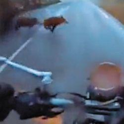 Si es difícil esquivarlos con un auto, mucho más lo es con una moto.