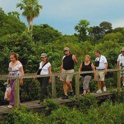 Los aventureros caminan sobre una de las tantas pasarelas de observación.