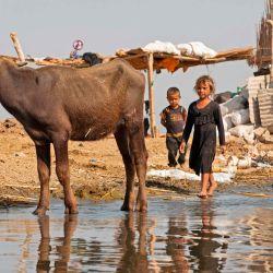 Los niños caminan por las marismas del distrito sur de Chibayish en la provincia de Dhi Qar, a unos 120 kilómetros al noroeste de la ciudad sureña de Basora.   Foto:Hussein Faleh / AFP