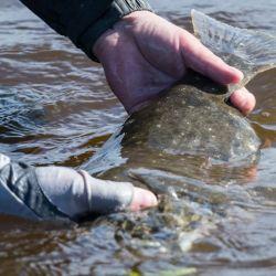 Cómo está la pesca esta semana en la Argentina