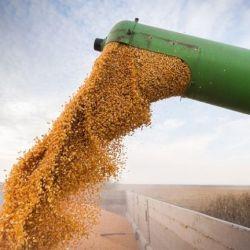 Exportación de maíz.