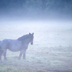 Mecklemburgo-Pomerania Occidental, Drieberg: un caballo se para dentro de un prado en medio de la niebla de la mañana antes del amanecer. | Foto:Jens Büttner / DPA