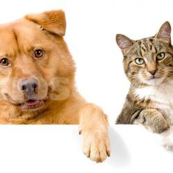 En el 99% de los casos, la rabia es provocada por perros.