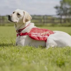 Genéticamente, los perros cuentan con una gran cantidad de receptores olfativos.