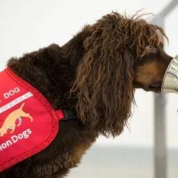 Por el momento, el alentador proyecto se está llevando a cabo con 8 perros.