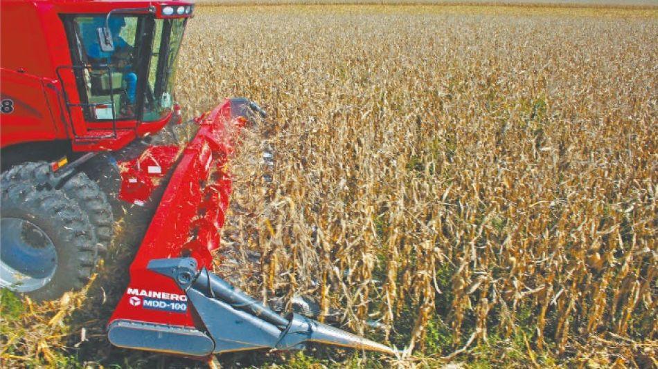 Cultivos de maíz.
