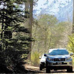 Los vehículos transitan por las huellas del parque, entre paredes y bajo un techo de bosque.