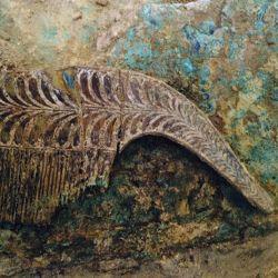 Entre los objetos que más les llamó la atención a los arqueólogos estaba una peineta.