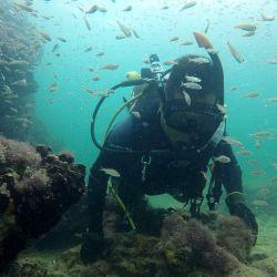 El hallazgo fue hecho por buzos polacos en las profundidades del mar Bálticotaban