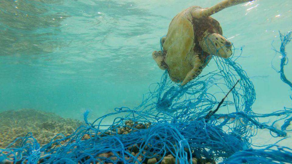 Plásticos enterrados en el Mar.