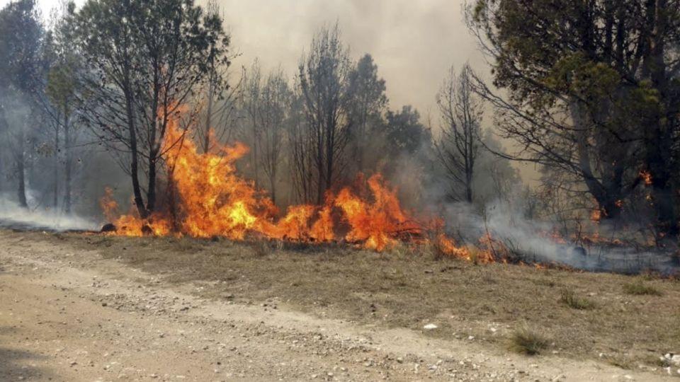 San Luis. Fueron arrasadas casi 100 mil hectáreas por los incendios forestales.