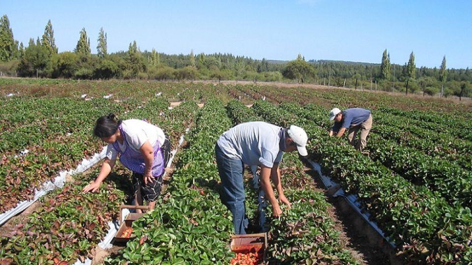 Agricultura familiar.