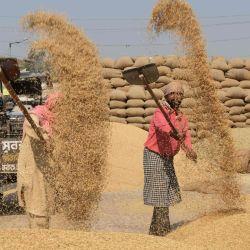 Los trabajadores usan palas para separar los granos de arroz de la paja en un mercado mayorista de granos en Amritsar. | Foto:Narinder Nanu / AFP