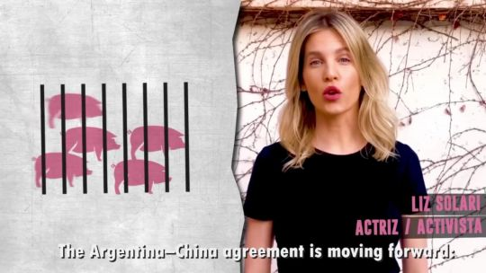 Liz Solari video acuerdo fabricas cerdos