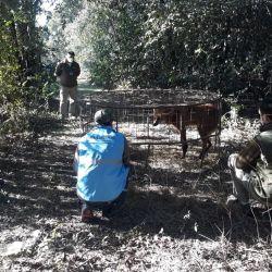 El animal había sido rescatada en agosto en la localidad bonaerense de General Villegas.