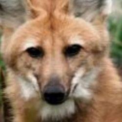 Tras ser rescatado en perfecto estado de salud, cumplió con el período de cuarentena en el Centro de Rescate del Parque Temaikén.