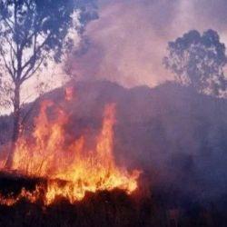 La intención es que los trabajos de restauración comiencen una vez que los incendios hayan cesado totalmente.