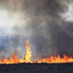 Hasta la tarde del jueves 15, los incendios ya habían arrasado con más de 1.800 hectáreas del Parque Nacional Calilegua.