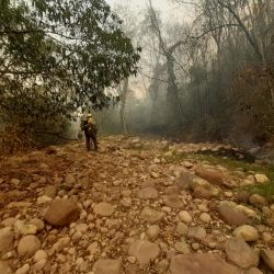 El proyecto busca ayudar a la naturaleza a resurgir tras los voraces incendios que están aquejando a la provincia de Jujuy.