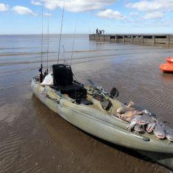 Bagres de mar, entremezclados con corvinas, están a tiro de caña desde el kayak en Berisso.