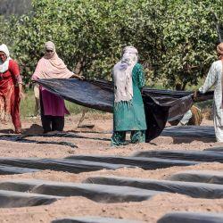 Los agricultores preparan un campo para la siembra de hortalizas en un campo en Lahore antes del Día Internacional de la Mujer Rural. | Foto:Arif Ali / AFP