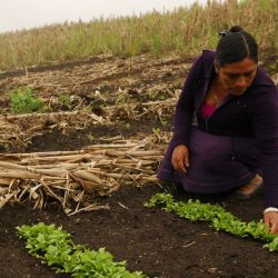 Fomento para proyectos de mujeres rurales.