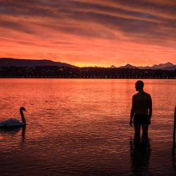 Un hombre observa a un curioso cisne pasar nadando mientras se adentra en el lago Ginebra para nadar al amanecer. | Foto:Fabrice Coffrini / AFP