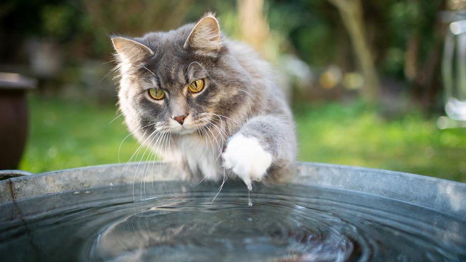 gatos en contacto con agua,  20201021