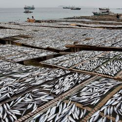 Pesca en China