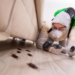 A pesar de su diminuto tamaño, las cucarachas son uno de los insectos más veloces del mundo.