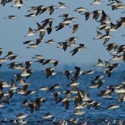 Cientos de ejemplares de patos cabeza negra, picazo y capuchino, entre tantas otras especies de aves, arriban a la zona en  la primavera.
