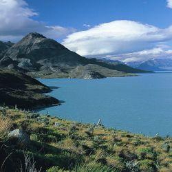 Varias especies exclusivas de Chile han logrado cruzar la Cordillera de los Andes y se están distribuyendo en la costa patagónica argentina, a la altura de Neuquén.