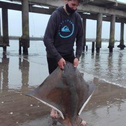Pescan un terrible chucho de 41 kilos en Mar del Plata.